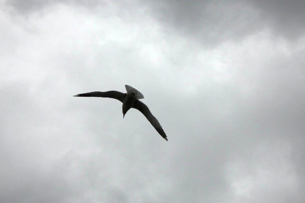 Исходное изображение чайки