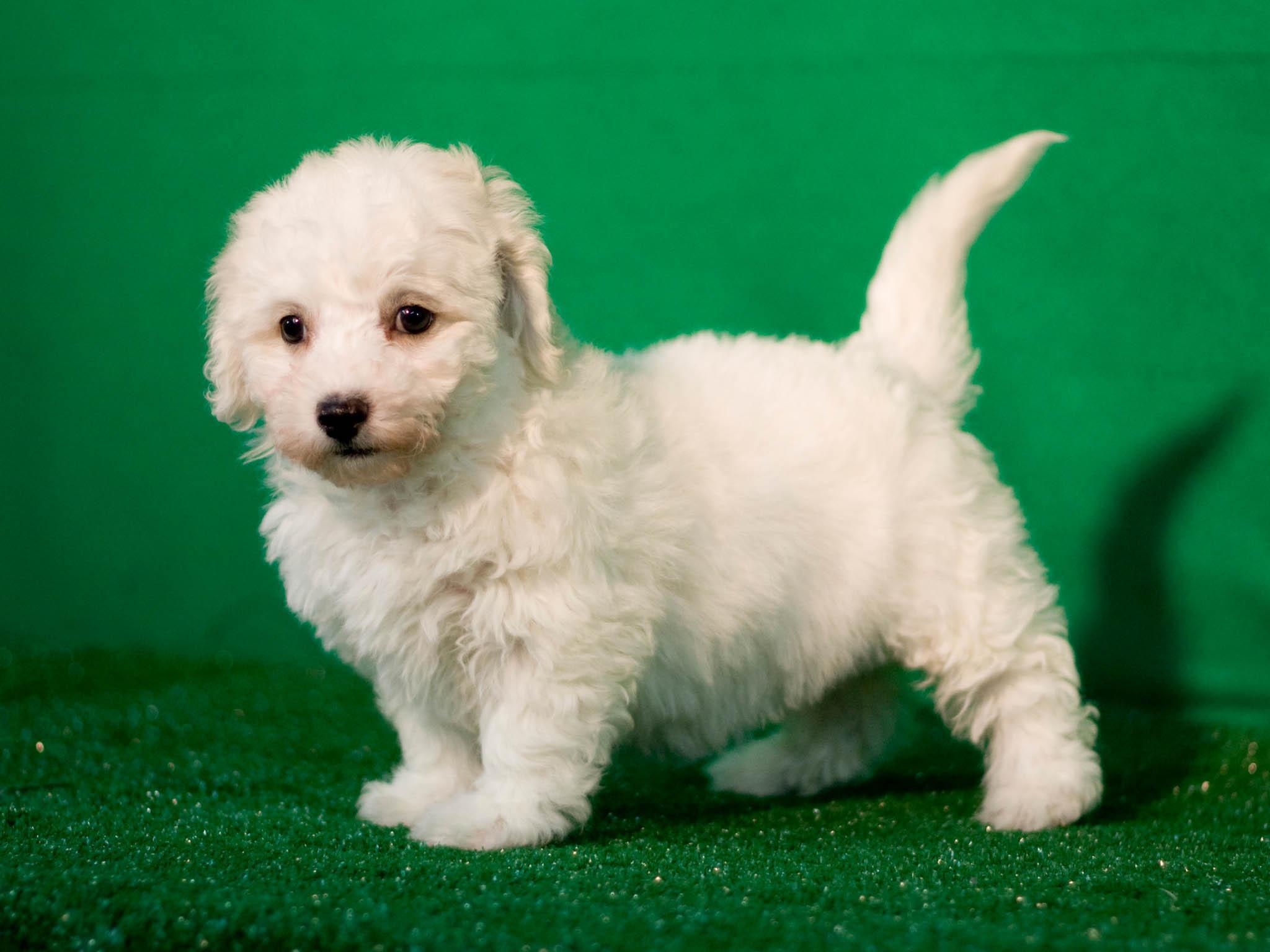 Исходное изображение щенка