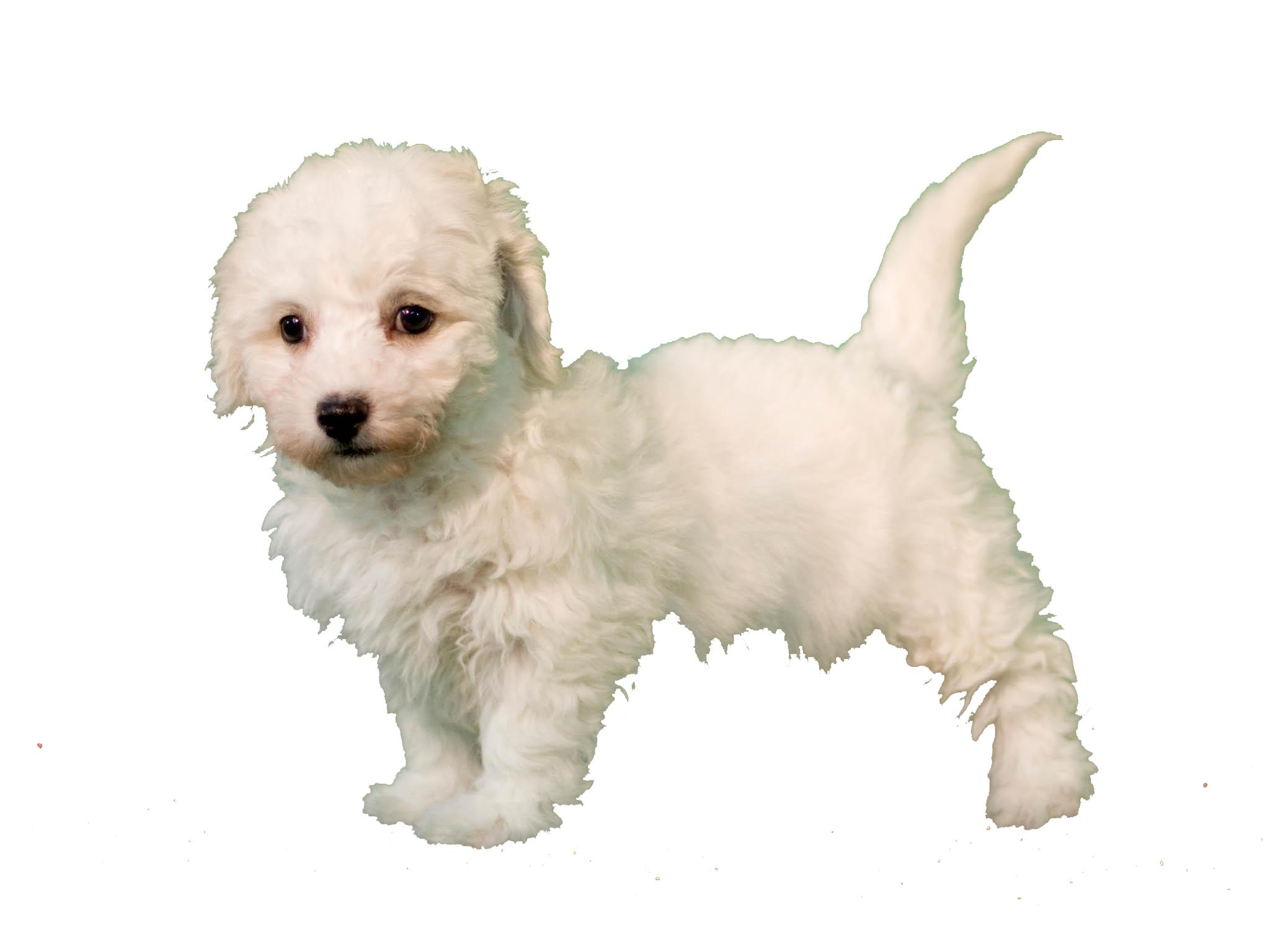Изображение щенка после обработки