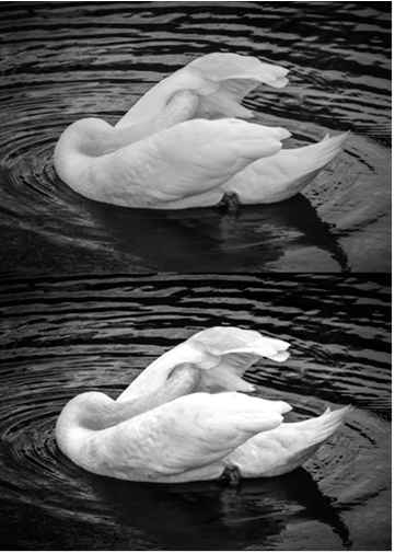 представлены два изображения: сверху автоматическое обесцвечивание, снизу обесцвечивание через панель «Коррекция» и настройки корректирующего слоя