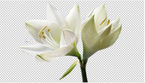 В результате получим изображение цветка на прозрачном фоне: