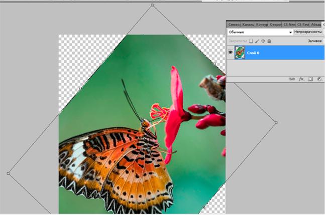 Нажмите CTRL+A чтобы выделить картинку и в выпадающем меню правой кнопки мыши выберите Свободное трансформирование.