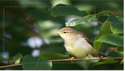 быстрая и удобная обрезки фото – через инструмент выделение в фотошопе
